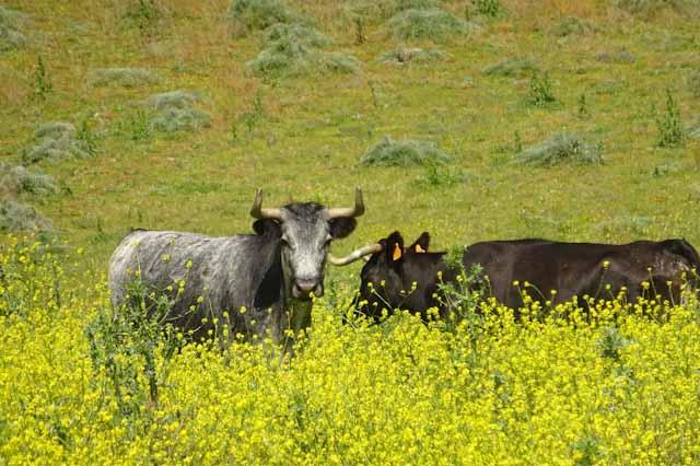 Visita las mejores ganaderías de la provincia de Cádiz.