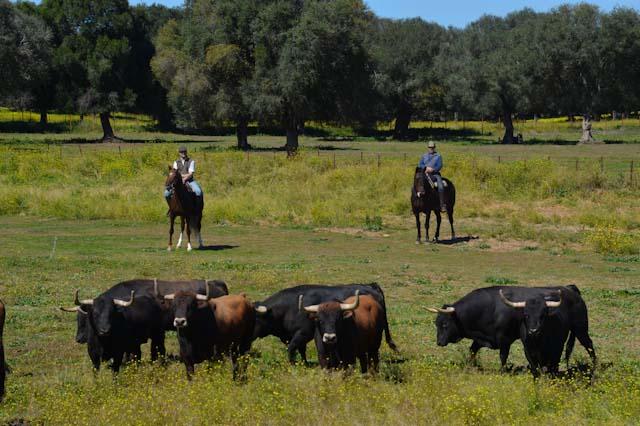 Visita una Ganadería de Toros Bravos en la provincia de Cádiz - 2020