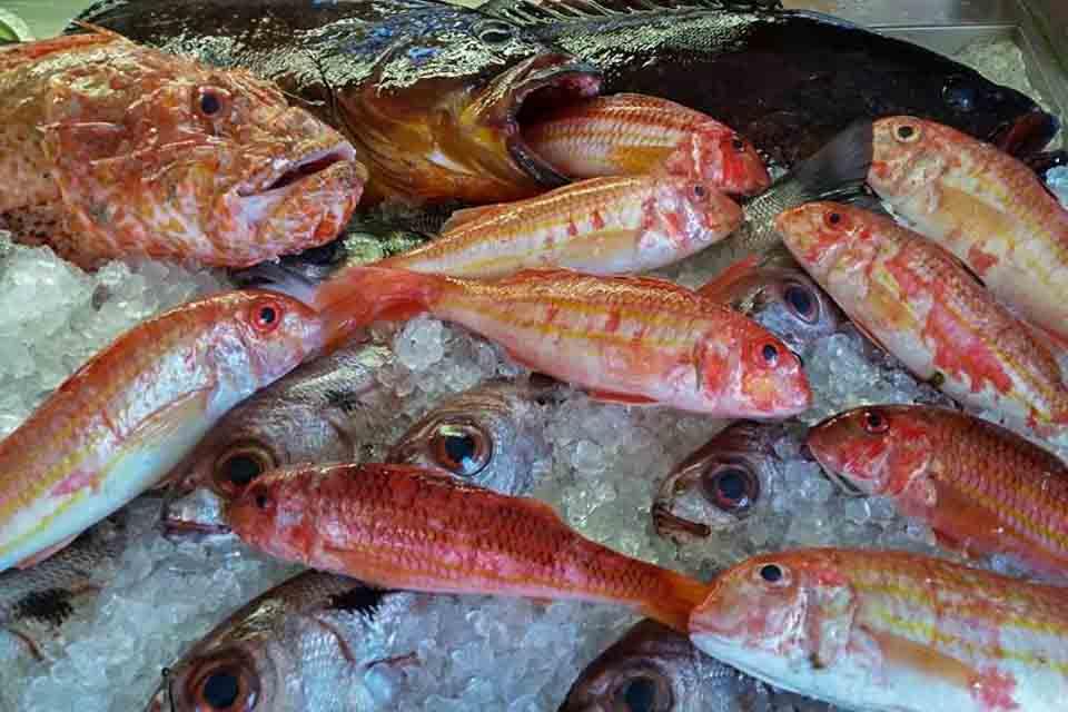 En el Restaurante El Puerto, en Tarifa, podrás degustar una excelente variedad de pescado fresco y marisco. Disfruta de una cocina cien por cien marinera, donde prima la calidad del producto y un trato cercano y amable.
