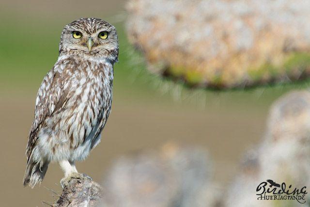 Te damos todas las claves sobre el turismo ornitológico en el Estrecho.