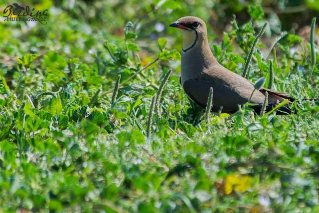 Descubre una nueva forma de conocer Cádiz con el turismo ornitológico.