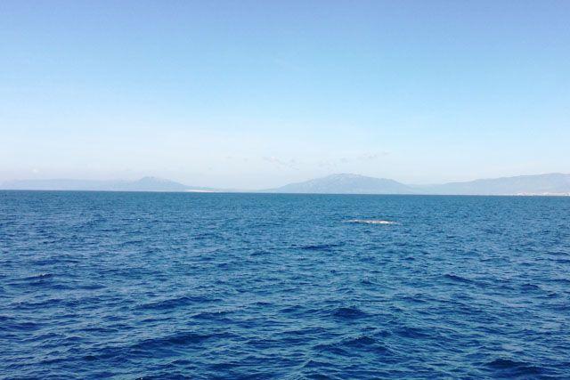 El avistamiento de cetáceos es una de las actividades más maravillosas que puedes hacer en Tarifa para disfrutar de estos animales en libertad.
