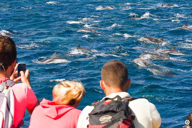 El avistamiento de ballenas y delfines es una de las actividades más inolvidables que puedes hacer en Tarifa.