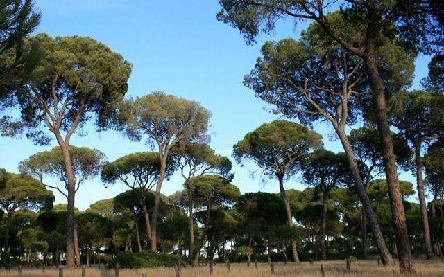 Parque Natural Entorno de Doñana