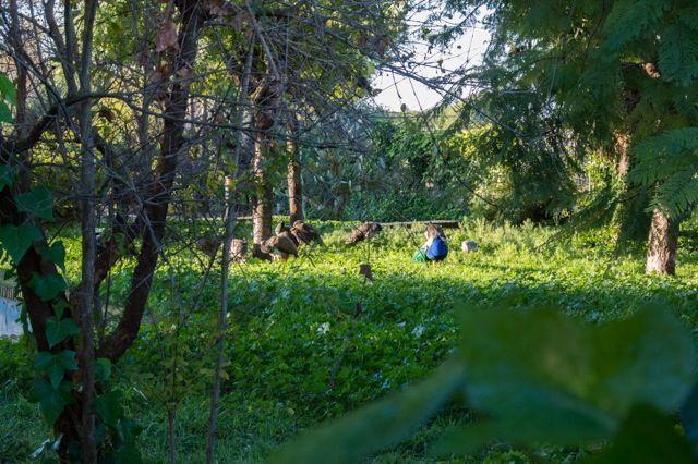 Parque La Toya