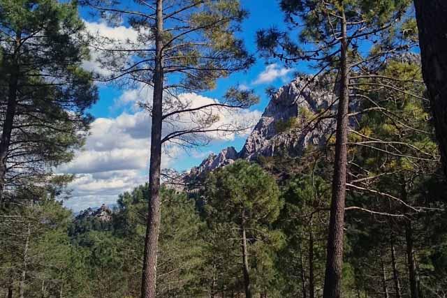 Ruta El Pinsapar – Grazalema